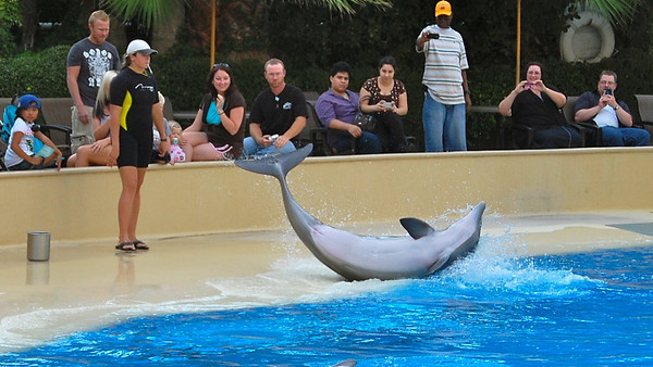 Dolphin spinning