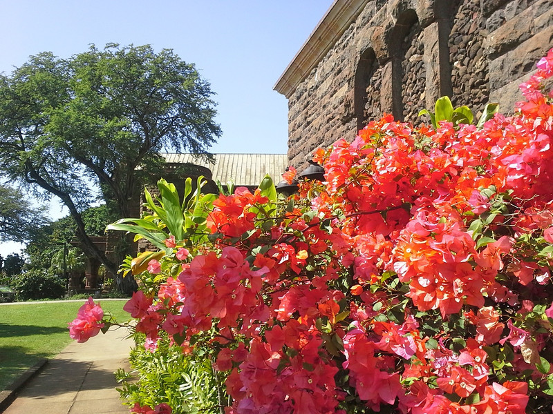 Flowers on the Bishop Museum grounds