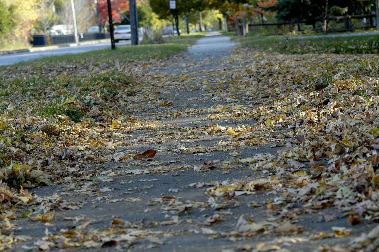 fallen leaves on sidewalk
